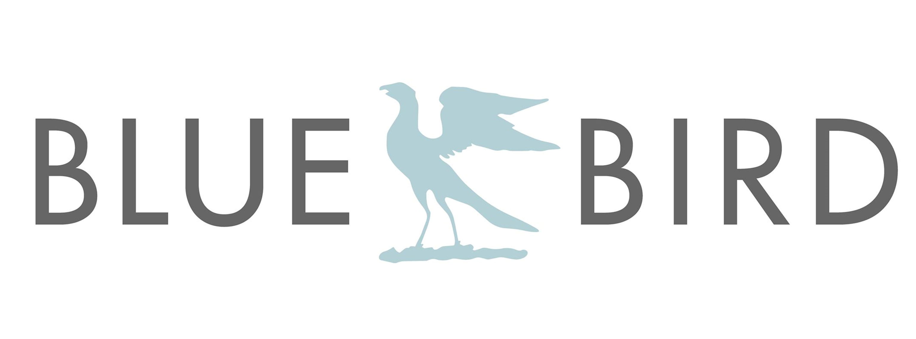 BBTeam cover photo banner blue bird