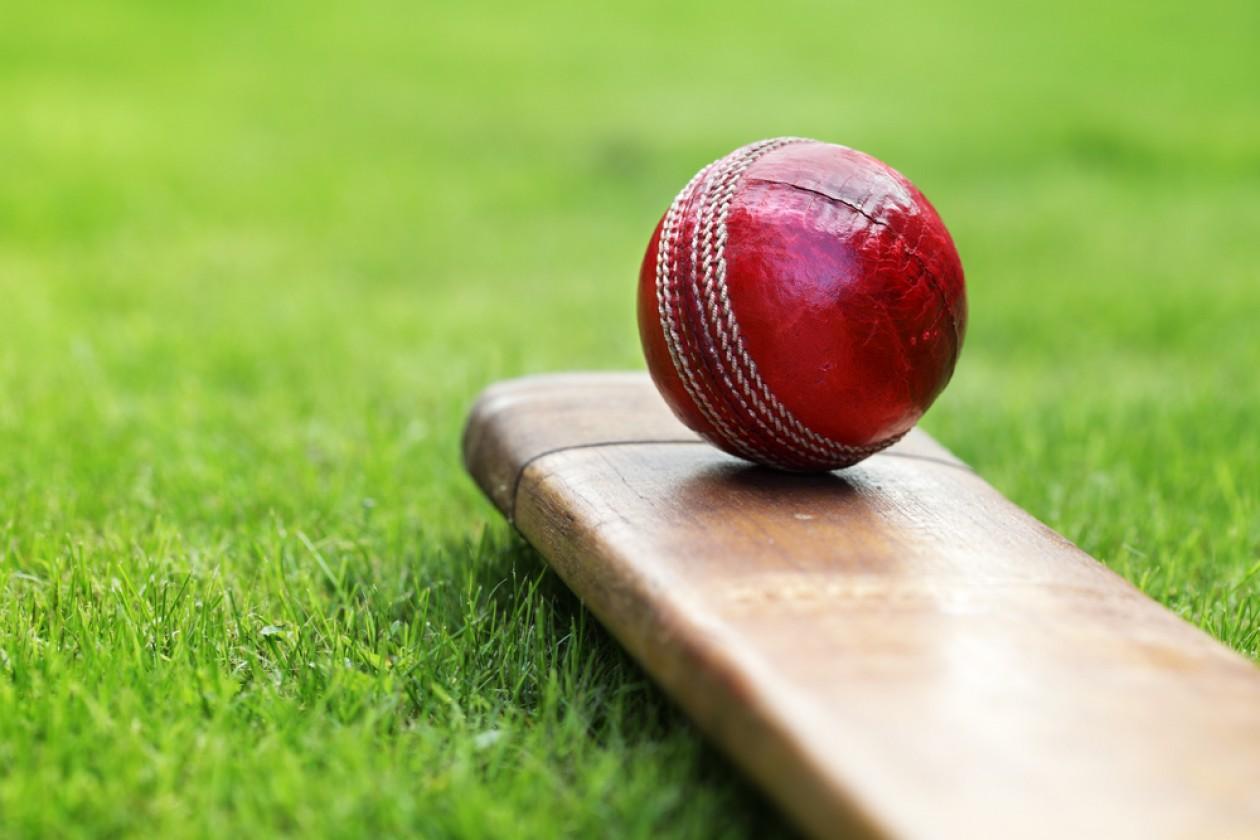 cricket ball bat